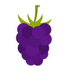 Fresh blackberry icon isolated vector