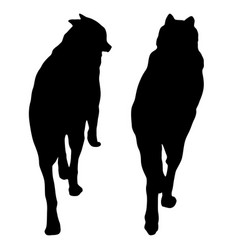 shepherd dog silhouette on a white background vector image