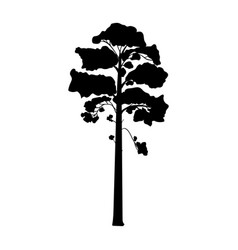 silhouette pine tree coniferous flora icon vector image