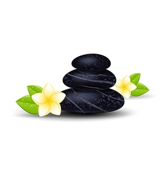 spa stones vector image