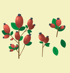 A branch with red berries and leaves vector