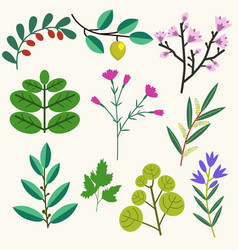 Plants set vector