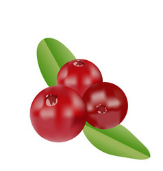 Realistic cranberries vector