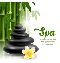 Spa still life vector image