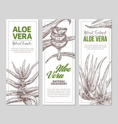 Aloe vera horizontal banners vector
