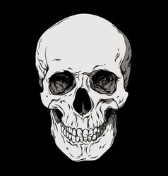 anatomically correct human skull isolated vector image