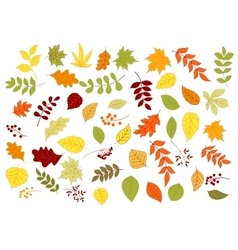 Autumnal leaves herbs seeds and berries vector