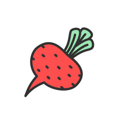 beet beetroot vegetable flat color line icon vector image