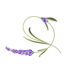 Bend single flower vector