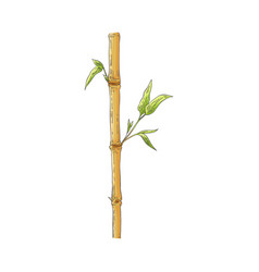 Brown bamboo stick with green leaves in sketch vector