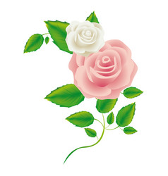 realistic silhouette with pink rose vector image