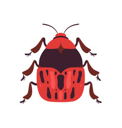Red bug soldier insect top view vector