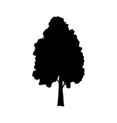 silhouette birch icon tree flora vector image