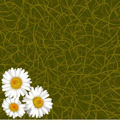 Background from grass and flowers of camomile vector image vector image