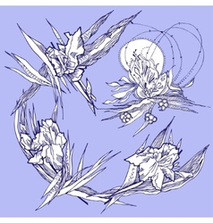 Background with irises vector image