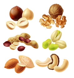 different nuts realistic set vector image