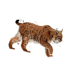 Lynx from a splash watercolor colored drawing vector