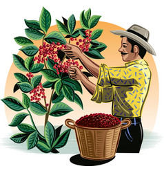 Man collecting coffee on a plantation vector