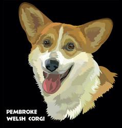 Pembroke welsh corgi portrait vector