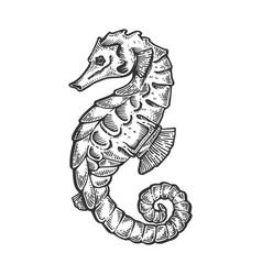 Sea horse animal engraving vector