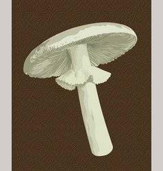 Toadstool mushroom vector