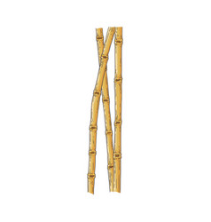 Bundle of brown bamboo sticks in sketch style vector