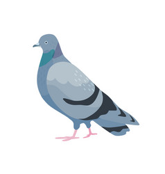 Gray pigeon flat cute bird vector