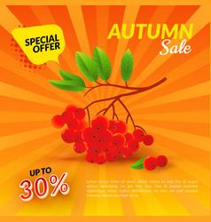 Rowan autumn sale vector