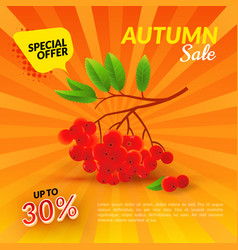 rowan autumn sale vector image