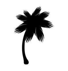 silhouette palm icon tree flora vector image