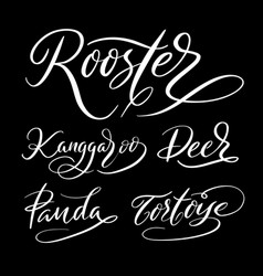 rooster animal hand written typography vector image vector image