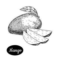 hand drawn sketch style fresh mango vector image