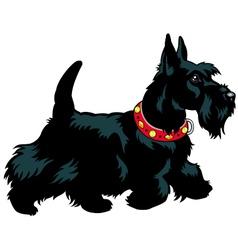 Scottish terrier vector
