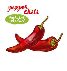 Chili peppers vegetable set hand drawn vector