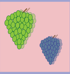 green grapes and purple bunches vector image