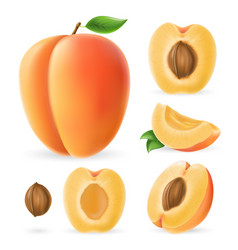 realistic apricot set vector image