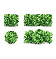 Set of bushes vector image