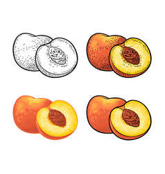 Whole and half peach with seed and leaf vector