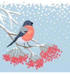 winter card with bullfinch on branch rowan vector image