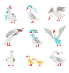 collection geese and goslings in different vector image