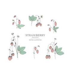 Hand drawn strawberry set vector