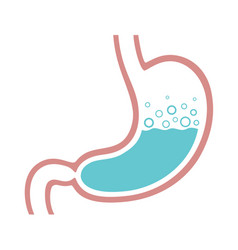 Stomach color vector