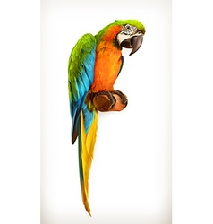 Parrot macaw vector image