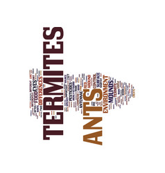 Termites and ants text background word cloud vector