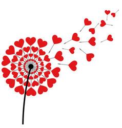 dandelion fluff red heart shape on white vector image