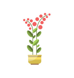 house plant indoor flower in pot elegant home vector image