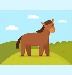domestic horse on walk color vector image