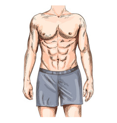 Fit and sexy male body athletic and muscular vector