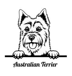 peeking dog - australian terrier breed - head vector image