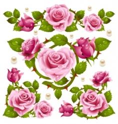 Rose design elements vector